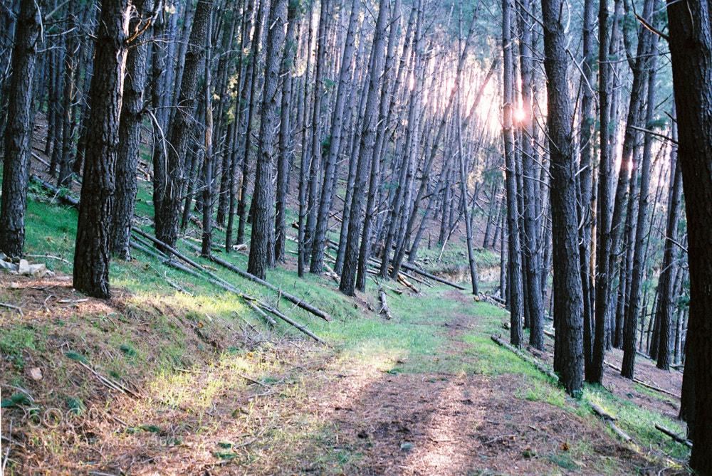 Photograph follow the path by Sam Clark on 500px