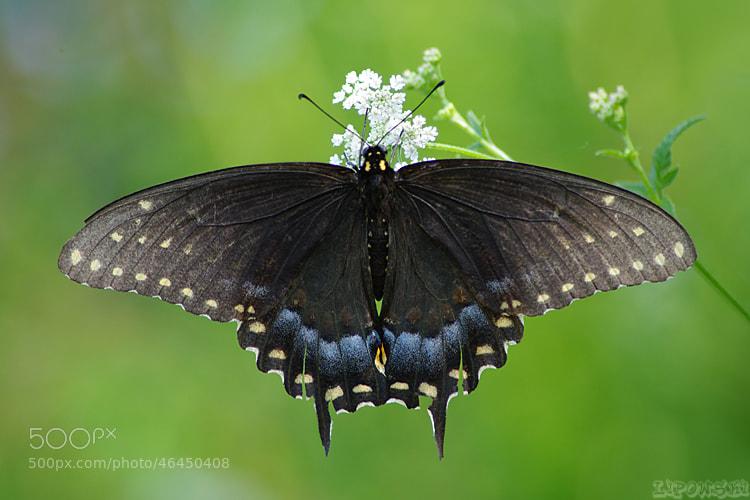 Photograph Black Beauty by Vie Lipowski on 500px