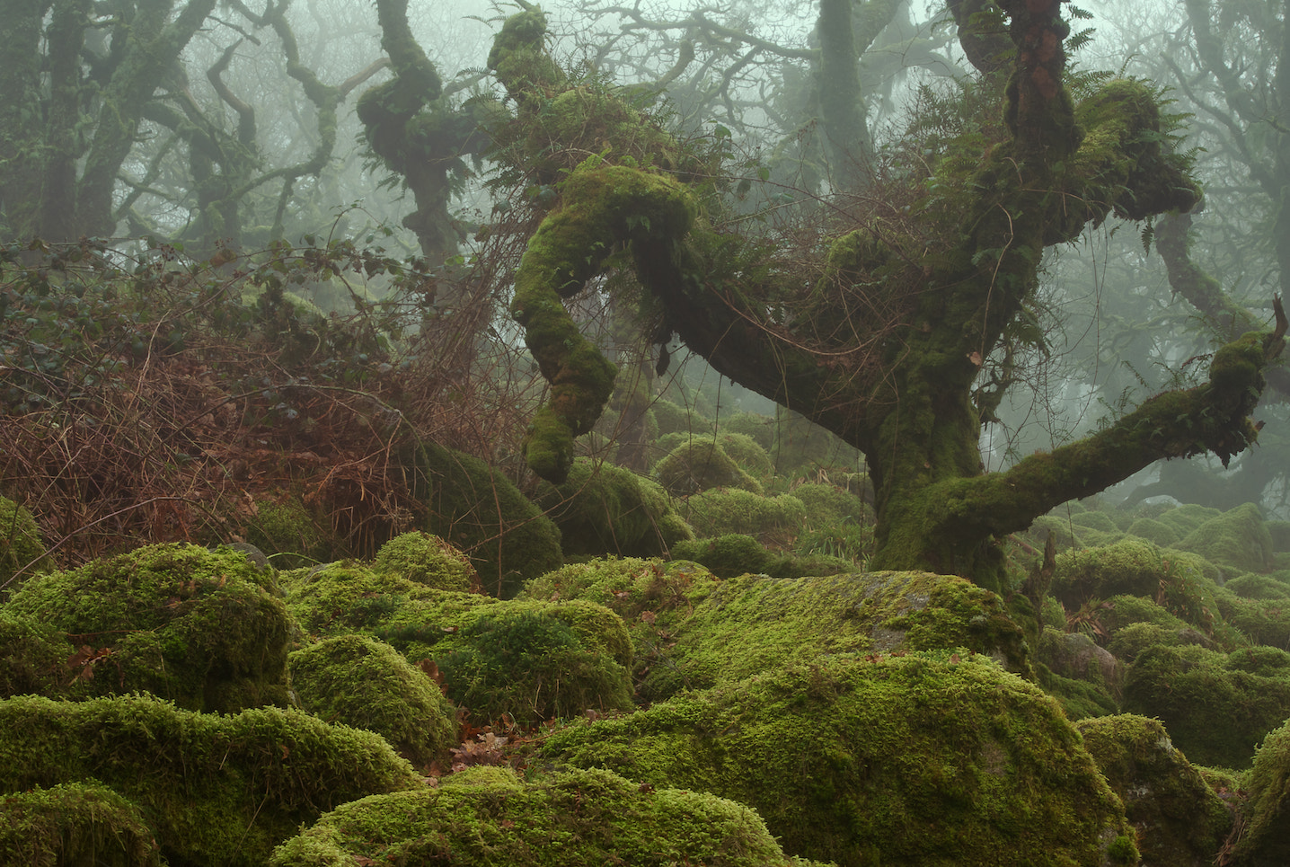 Photograph Tangled by duncan george on 500px