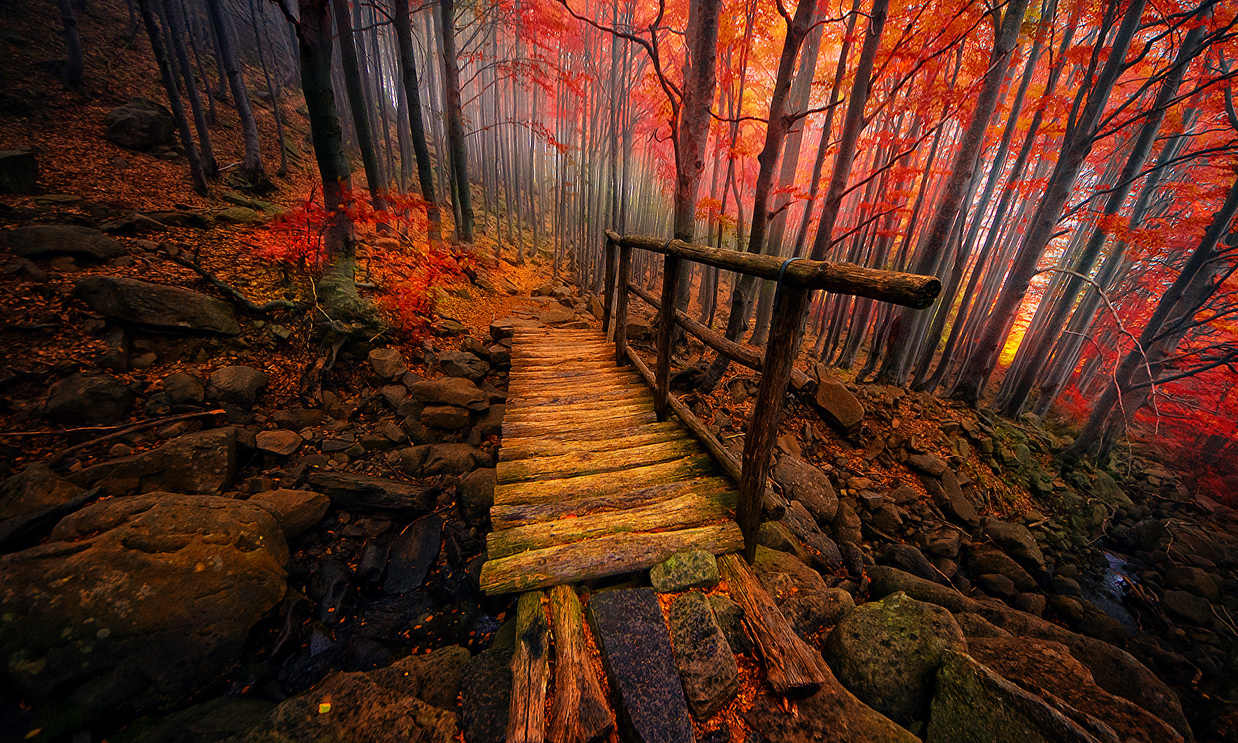 Photograph Autumn by Merca Michael on 500px