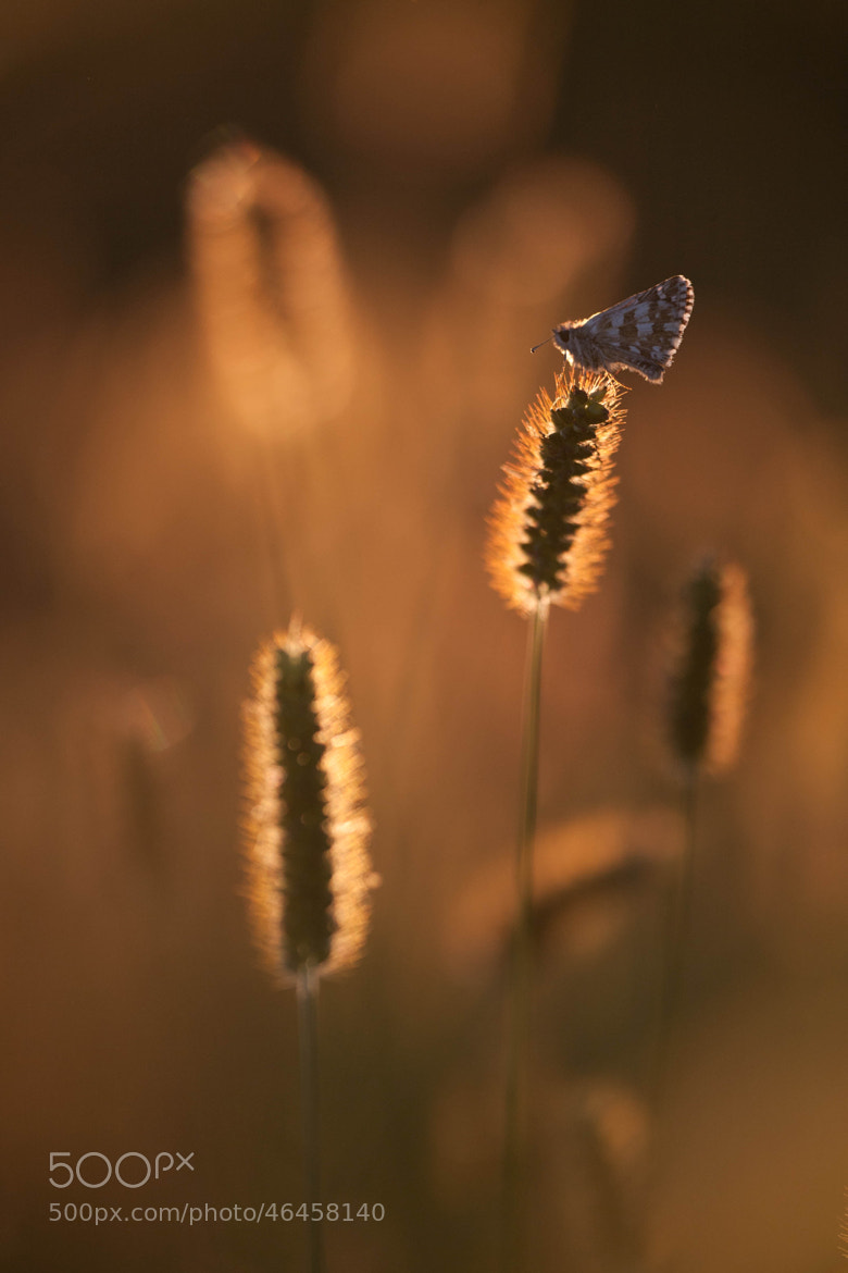 Photograph Small by Stefano Romanò on 500px