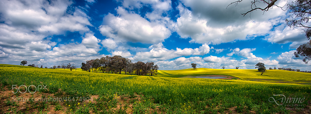 Photograph Golden Farm by Jason Pang on 500px