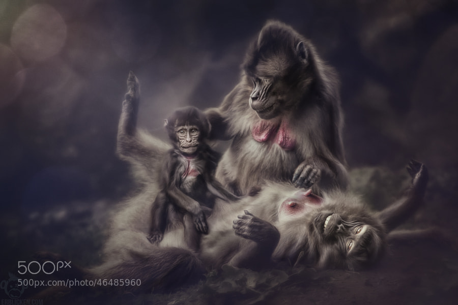 Photograph Gelada Family Portrait by Manuela Kulpa on 500px