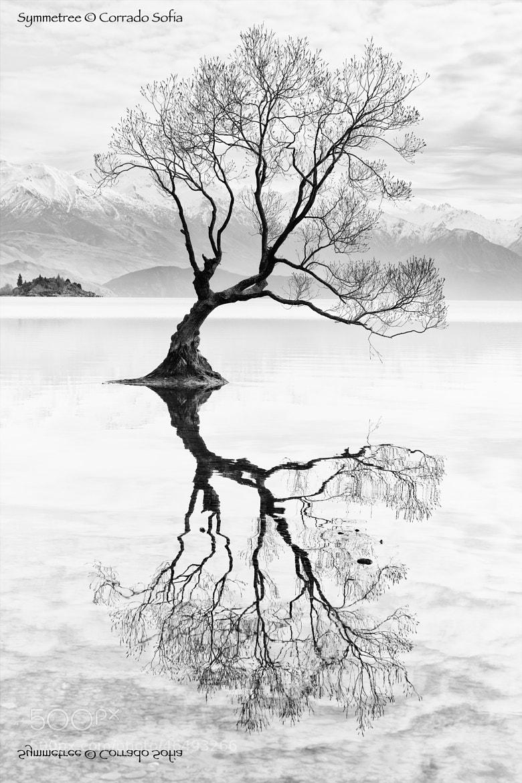 Photograph Symmetree by Corrado Sofia on 500px