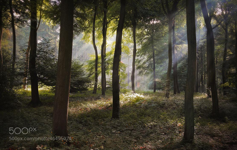 Photograph September Woods by Ceri Jones on 500px