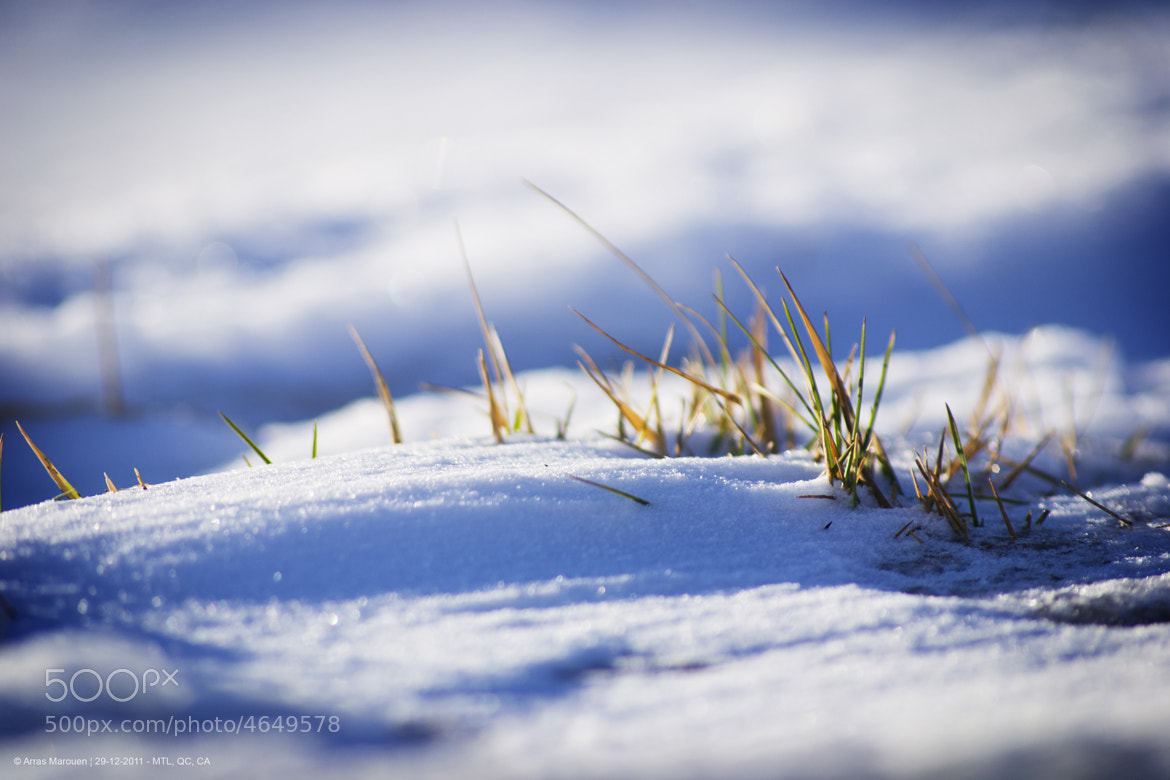 Photograph Winter i love you by Marouen Arras on 500px