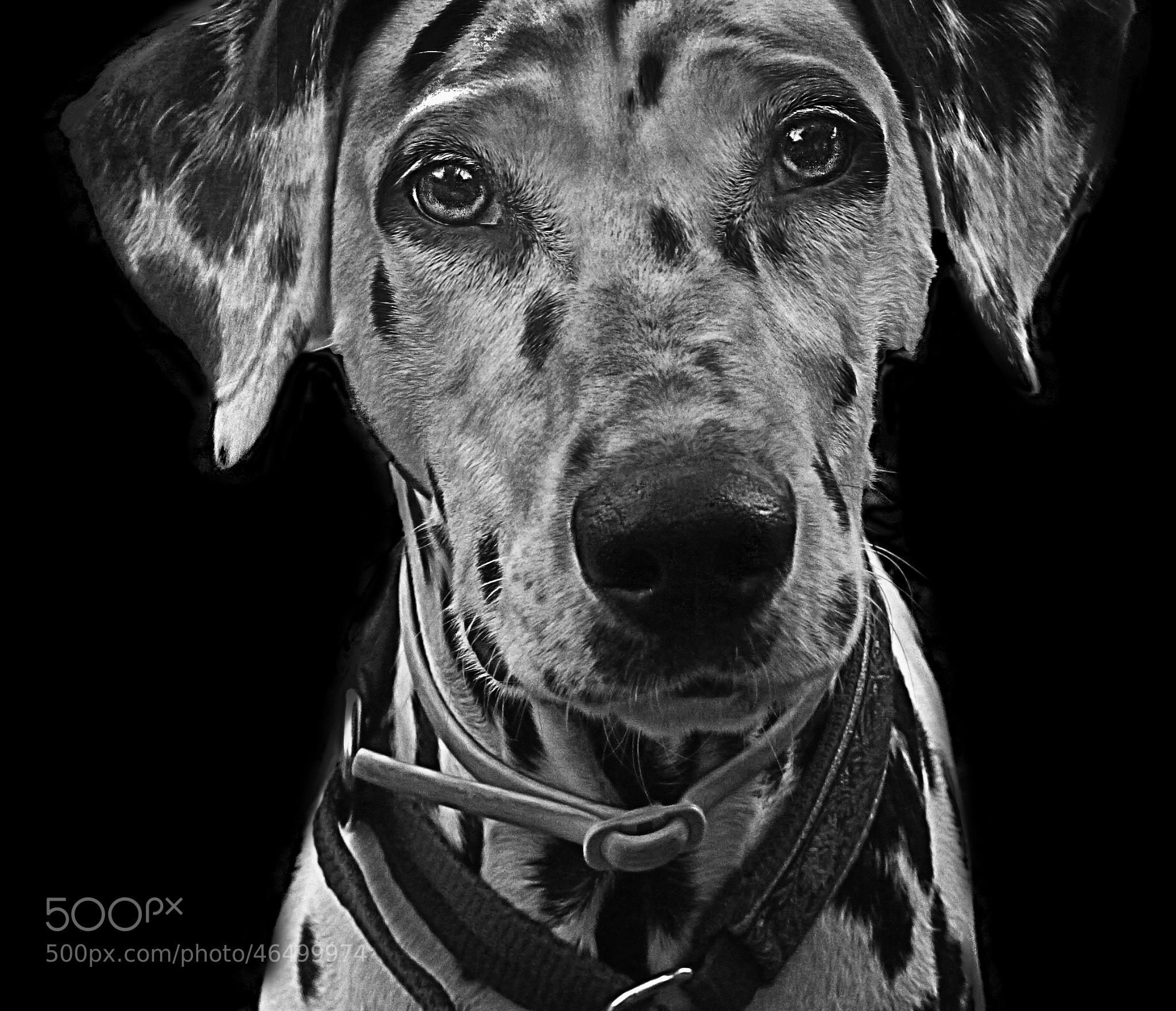 Photograph Dalmata by Lola Camacho on 500px