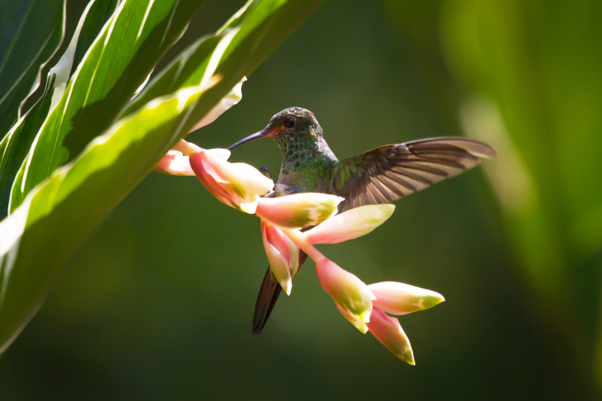 Photograph Hummingbird by Marc Guille on 500px
