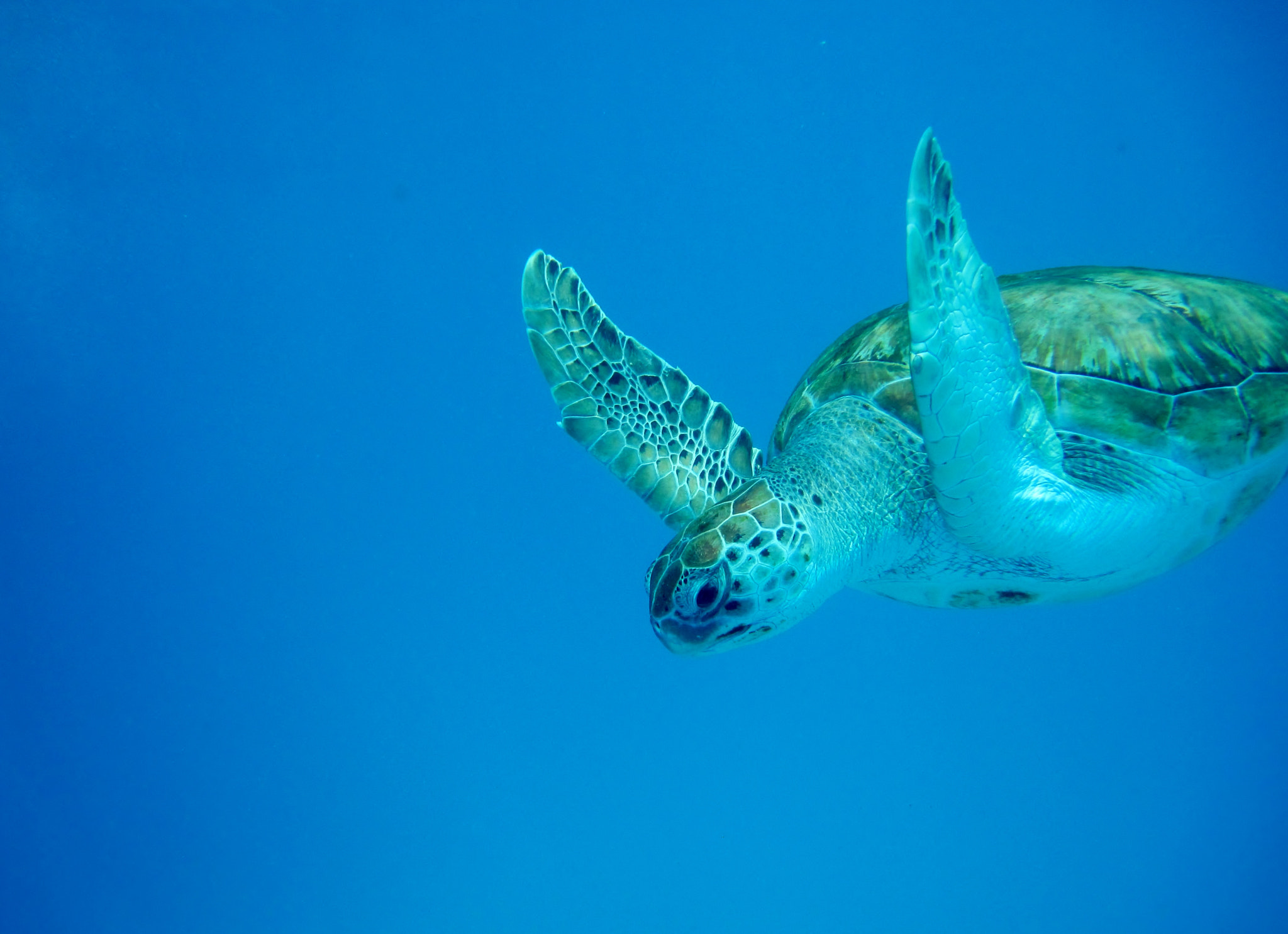 Photograph Green Turtle by Robert Deane on 500px