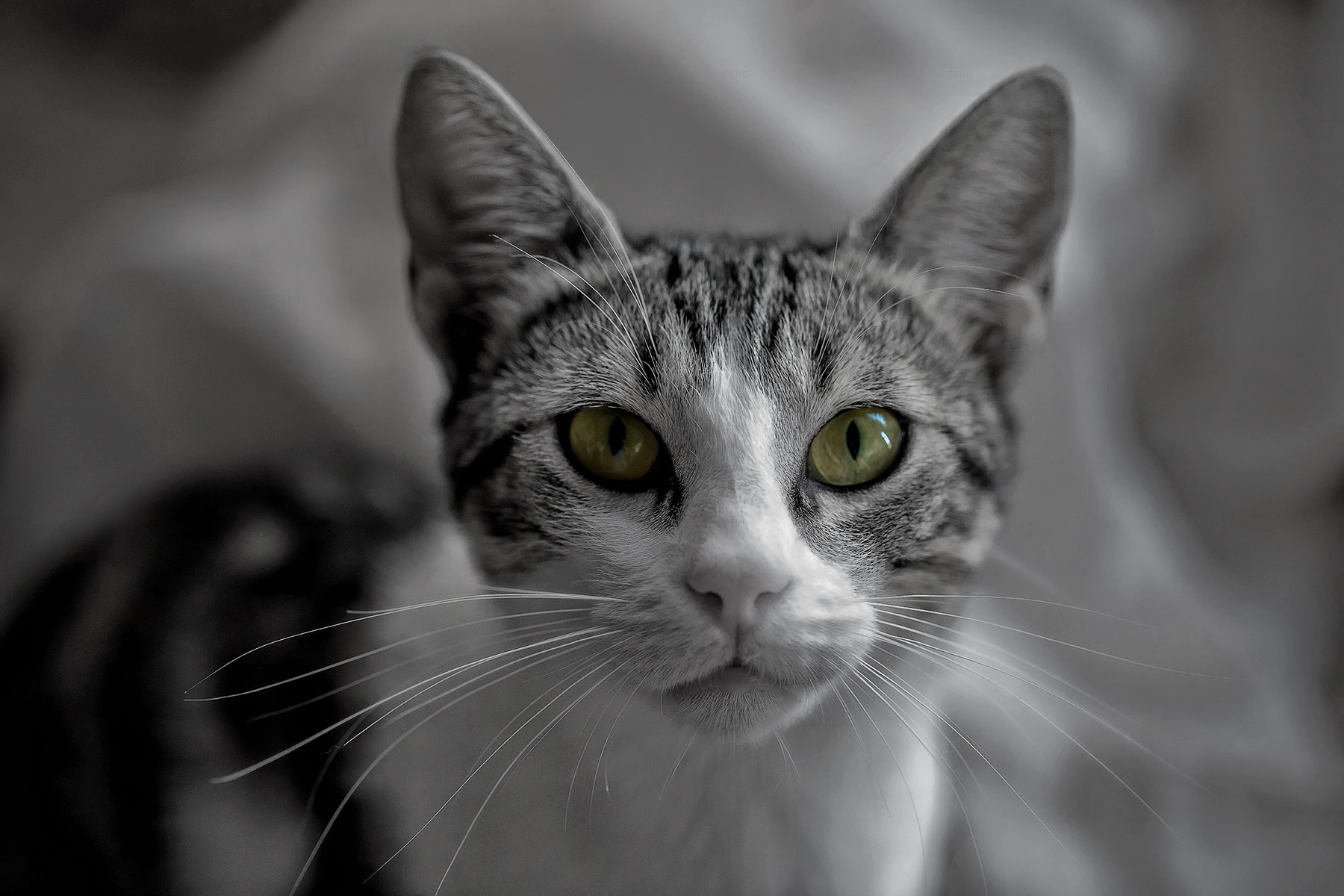 Photograph Cleo by Alfon No on 500px