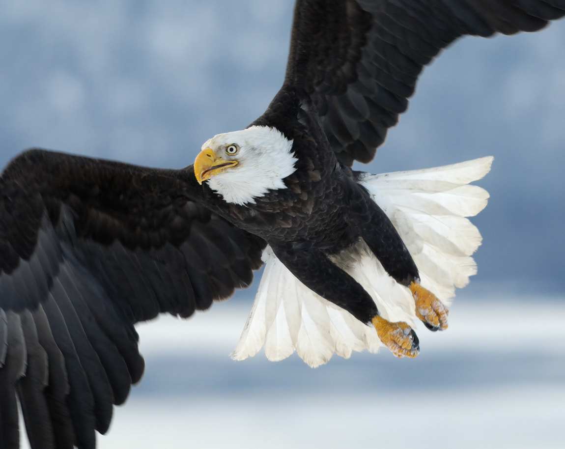 Photograph Close Encounter II by Harry  Eggens on 500px