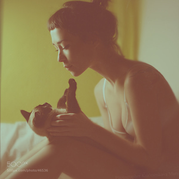 Photograph Cats by Kuzmenkova Mary on 500px