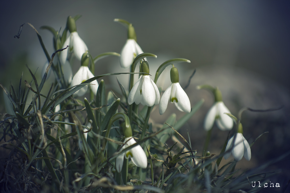 Photograph cloudy snowdrop by Julia Iva on 500px