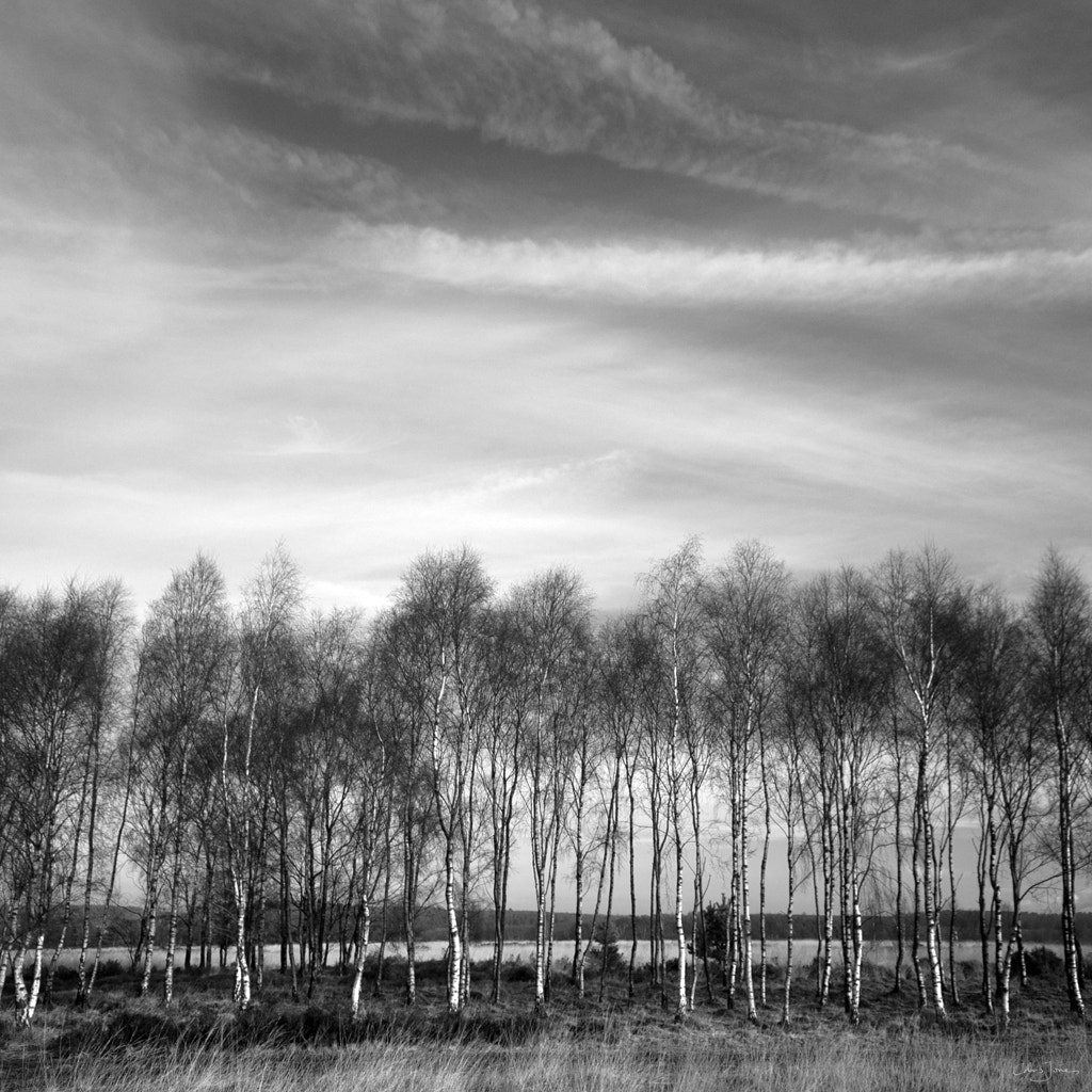 Photograph Tree line by Chris Jones on 500px