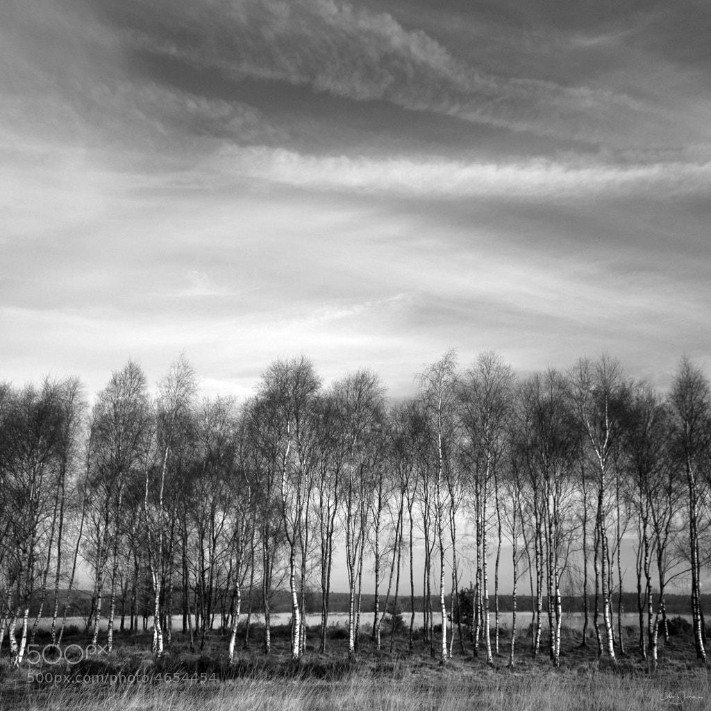 Photograph Tree line by Chris Jones on 500px