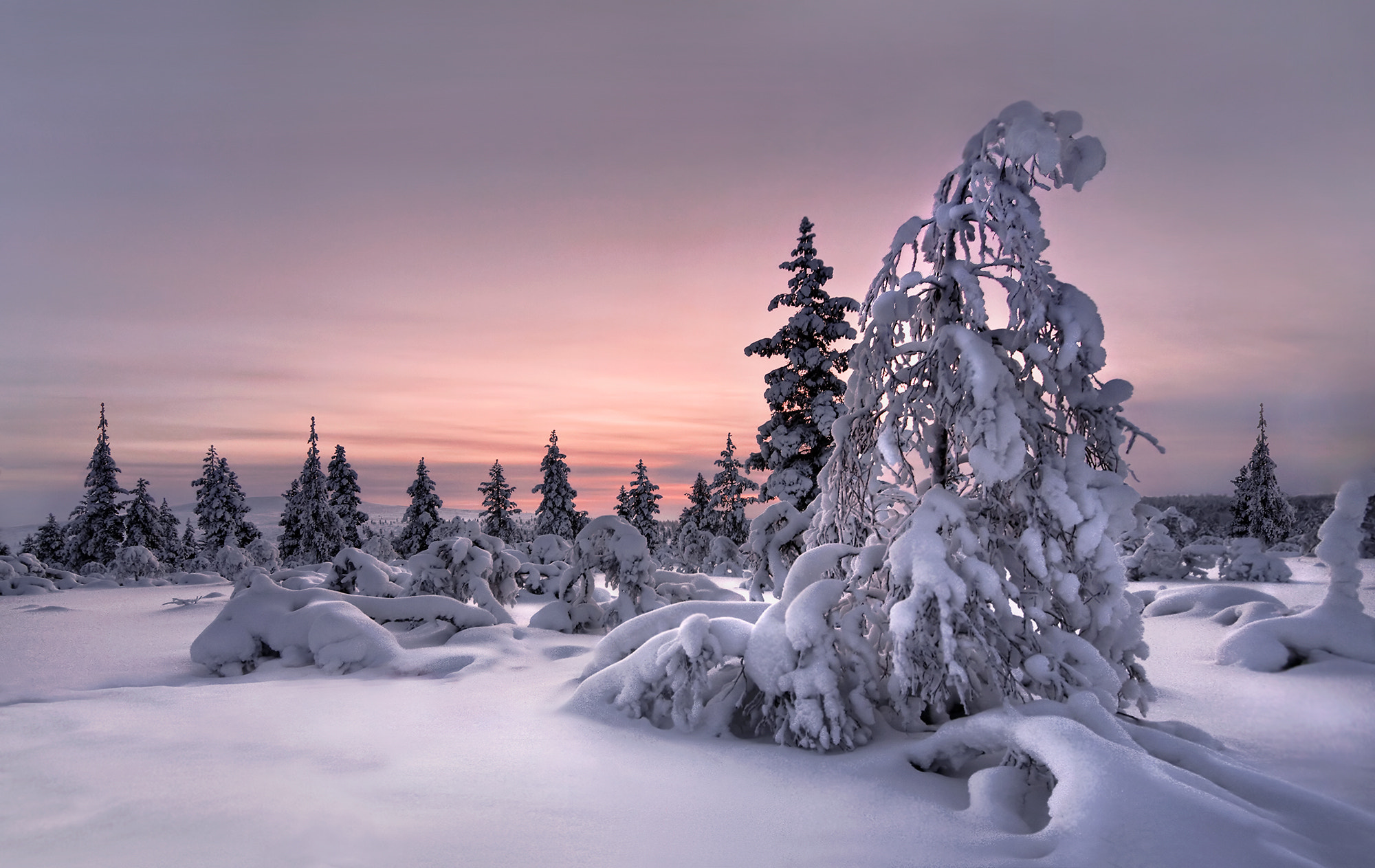 Photograph Lappland - Winterwonderland by Christian Schweiger on 500px