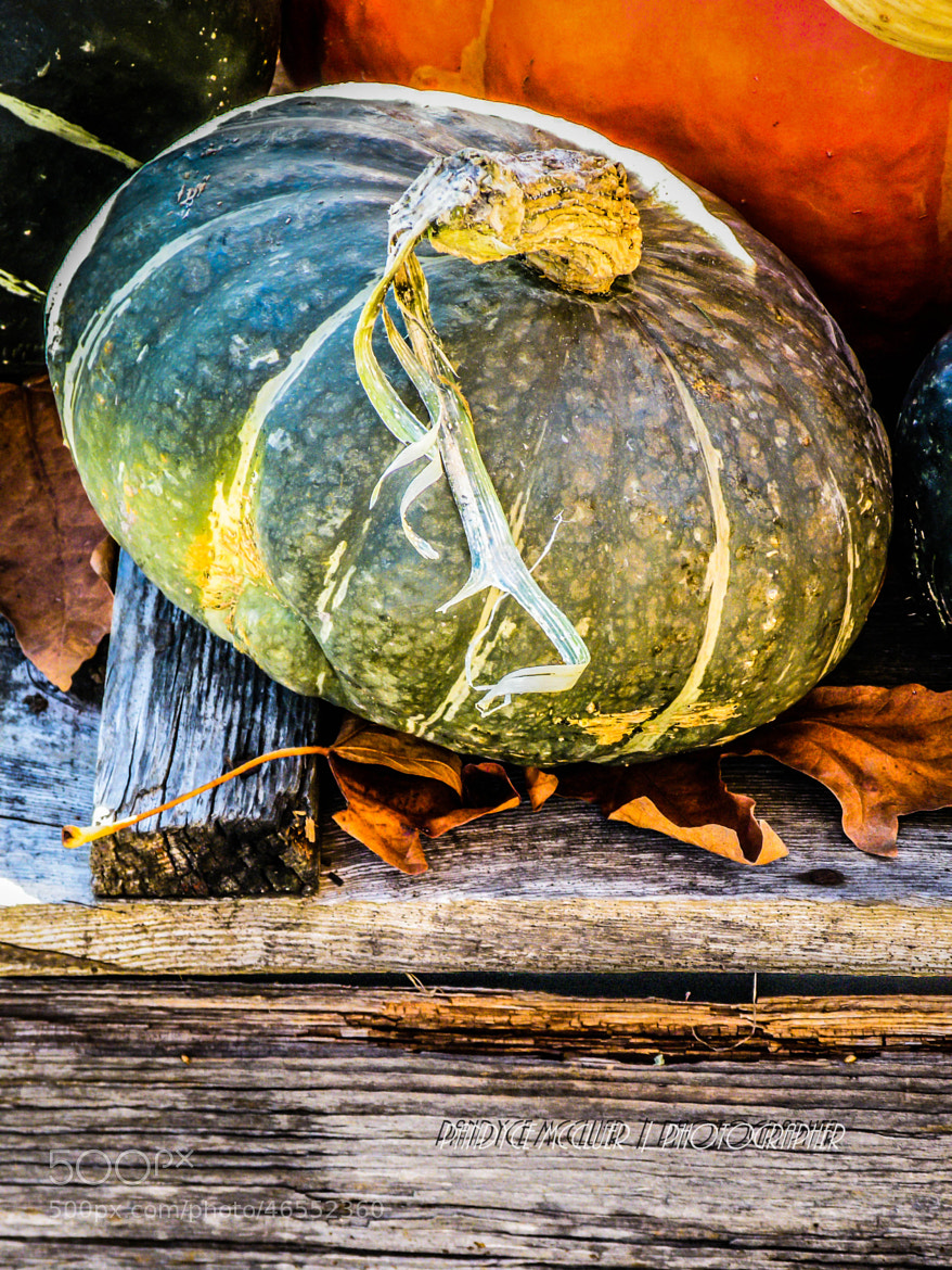 Photograph Farm Stand by Pandyce McCluer on 500px