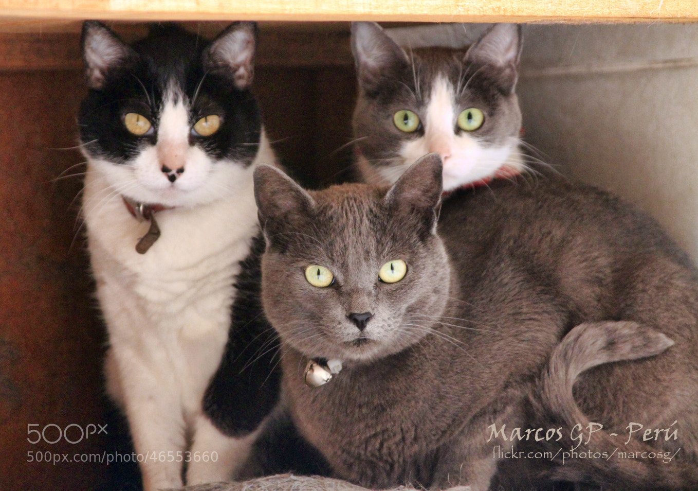 Photograph My Cats by Marcos  Granda P. on 500px