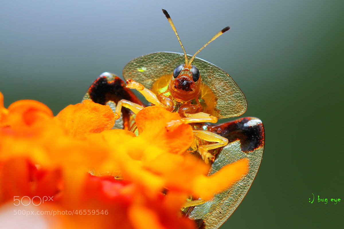 Photograph H! by bug eye :) on 500px