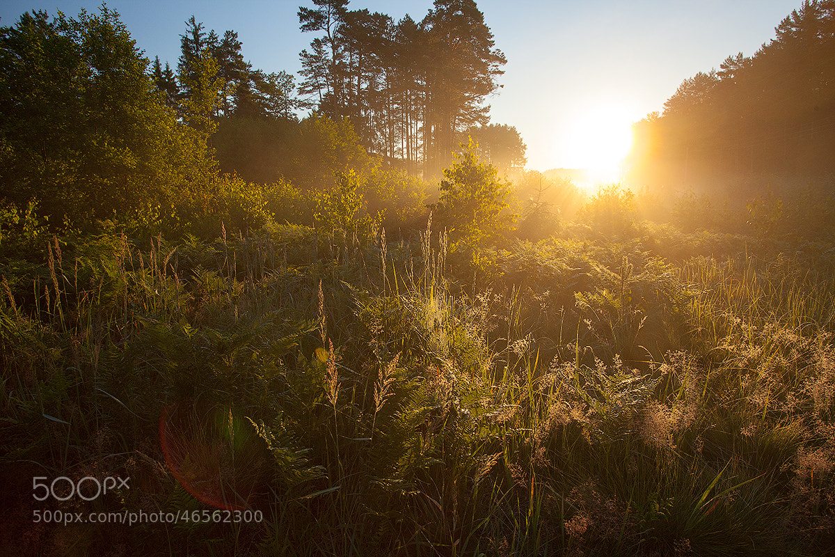 Photograph Sun Wake Up by Denis Belyaev on 500px