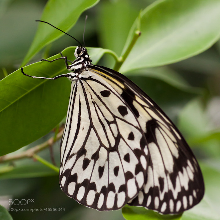 Photograph Butterfly by Pia Schneider on 500px