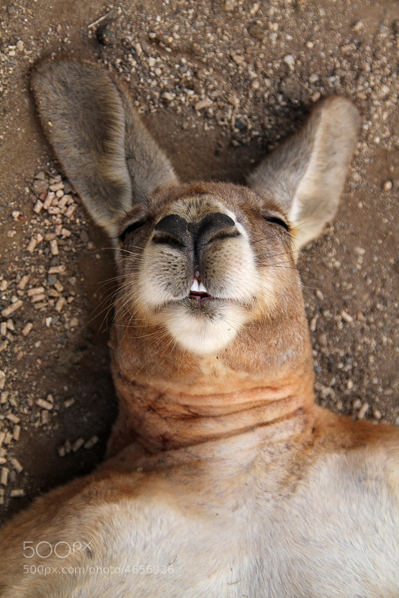 Photograph Happy-roo by Simonne Kelly on 500px
