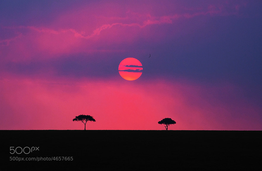 Photograph Land of the Maasai (Kenya) by Aubrey Stoll on 500px