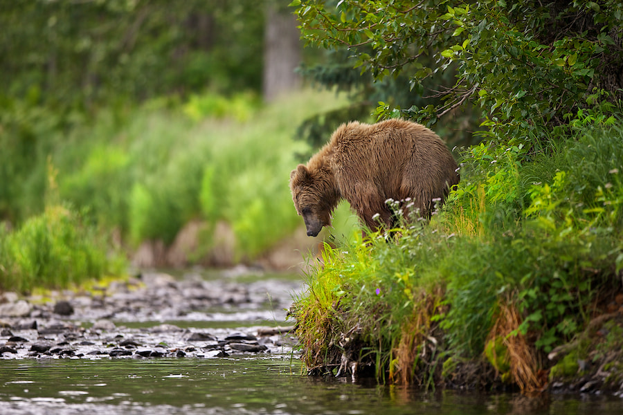 Photograph The Search For Salmon by Buck Shreck on 500px