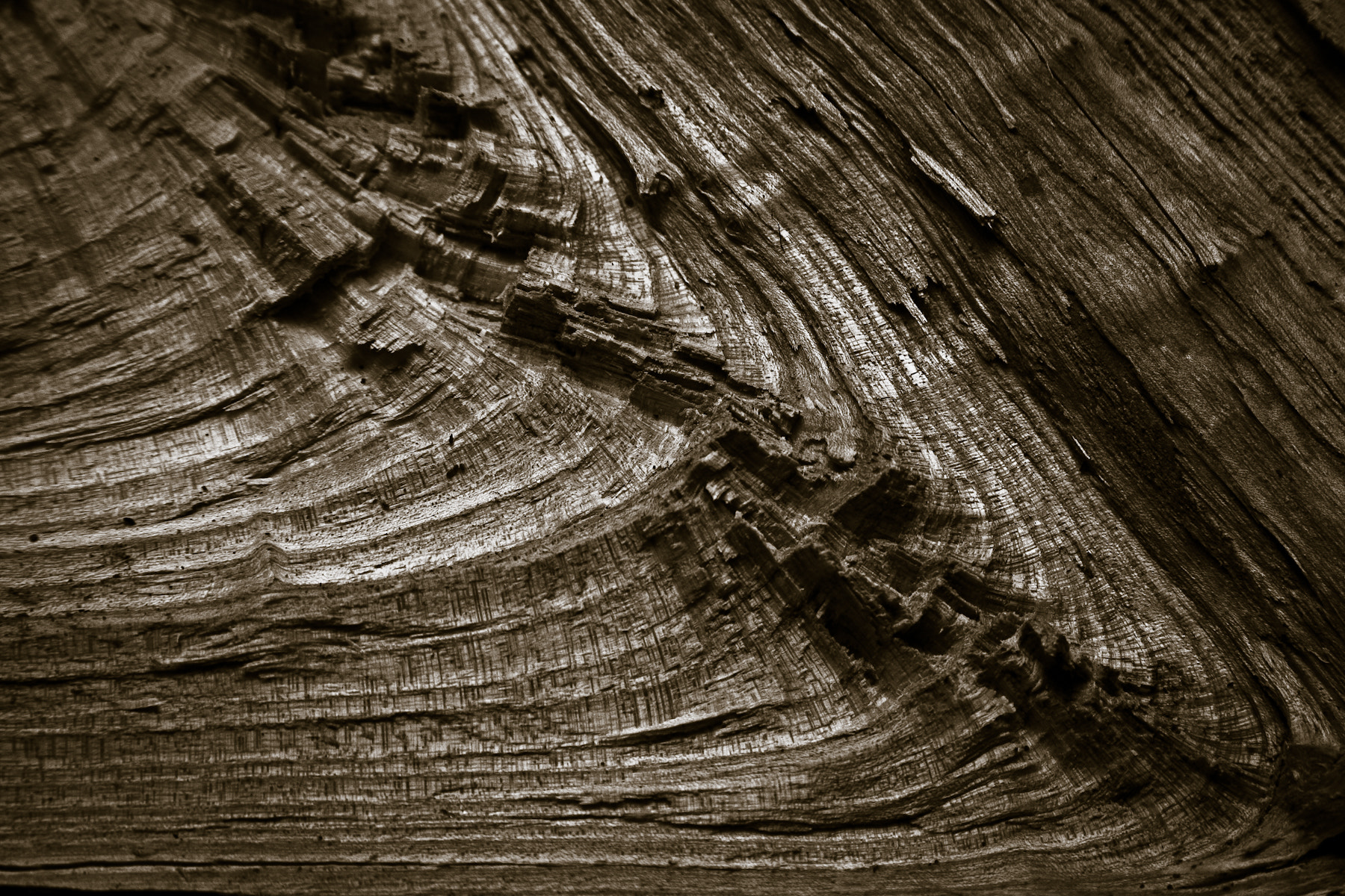 Photograph Wood landscape by Noel Kelly on 500px