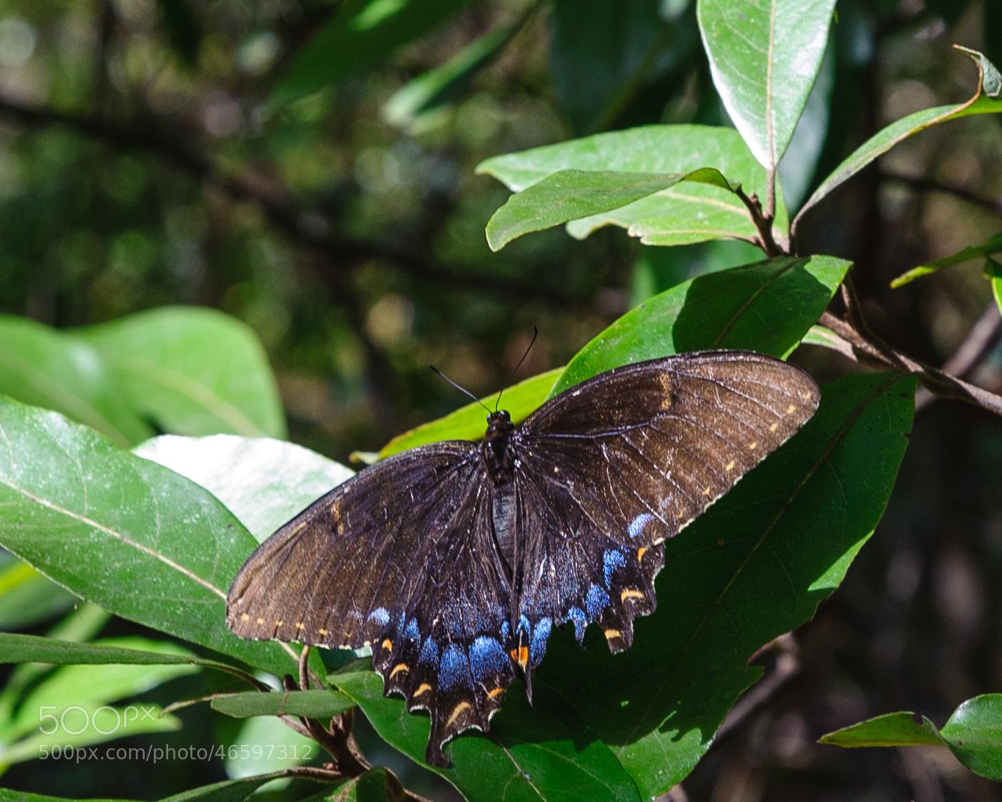 Photograph Butterfly by John Kennington on 500px