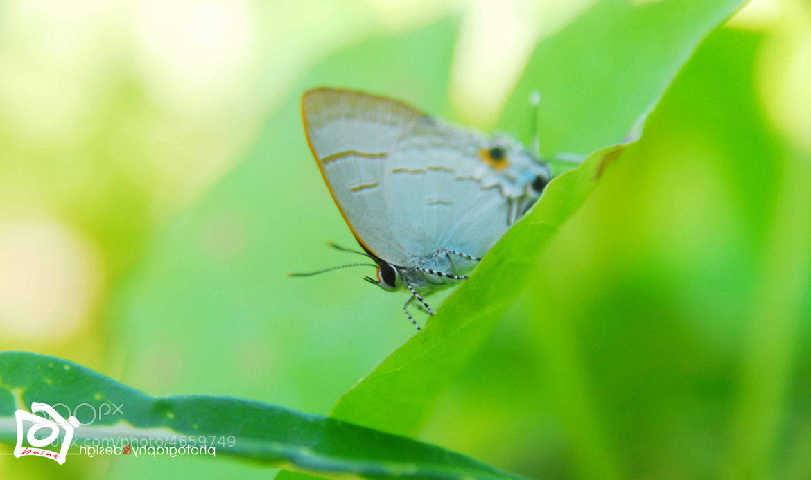 Photograph nature of Nikon : 29 Jan 2012 by Adha Photography on 500px