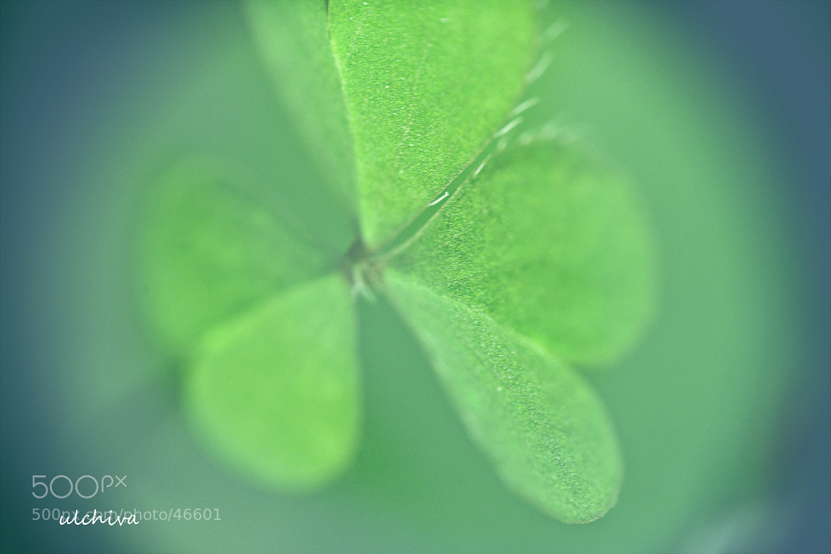 Photograph trefoil by Julia Iva on 500px
