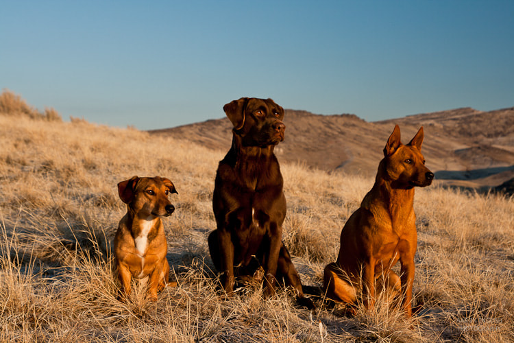 Photograph Canine Sunrise  by Aaron English on 500px