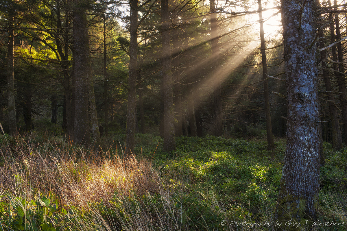 Photograph Sun Ray in the forest. by Gary Weathers on 500px