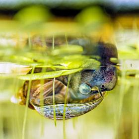 Snail | Blasenschnecke - 2mm