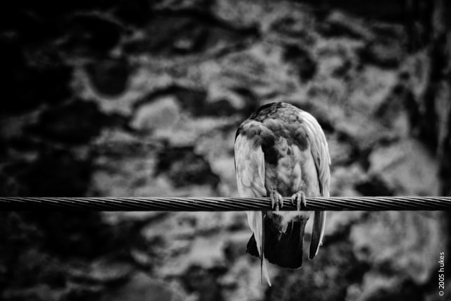 Photograph Headless pigeon by hukes . on 500px