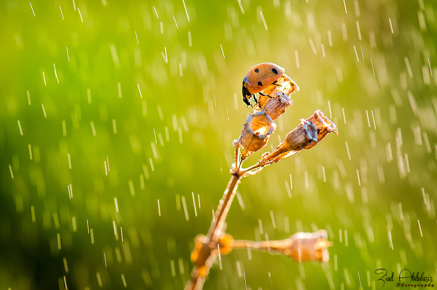 Under the rain by Ziad AbdulAziz on 500px.com