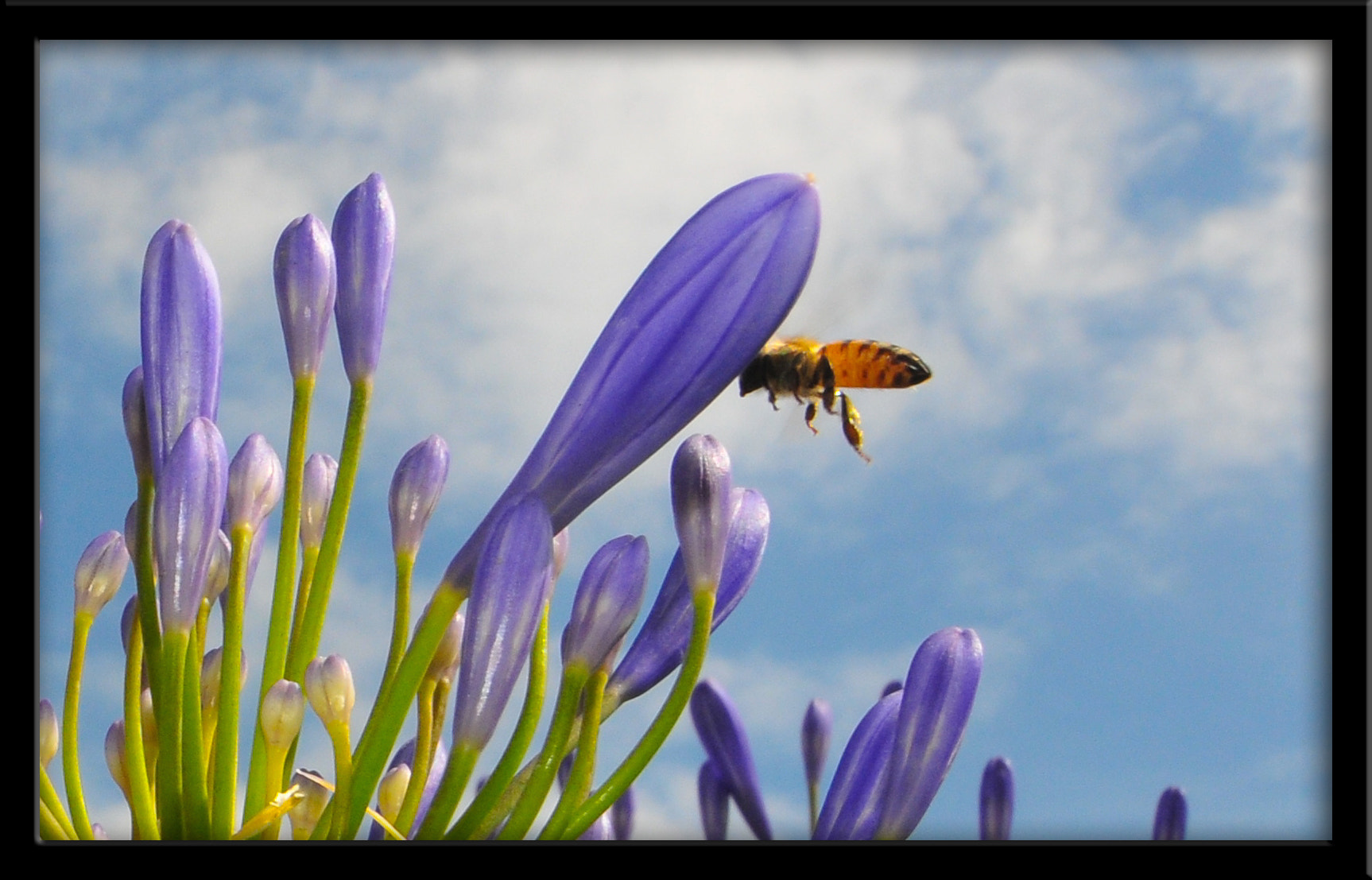 Photograph Buzz by Howard Bond on 500px