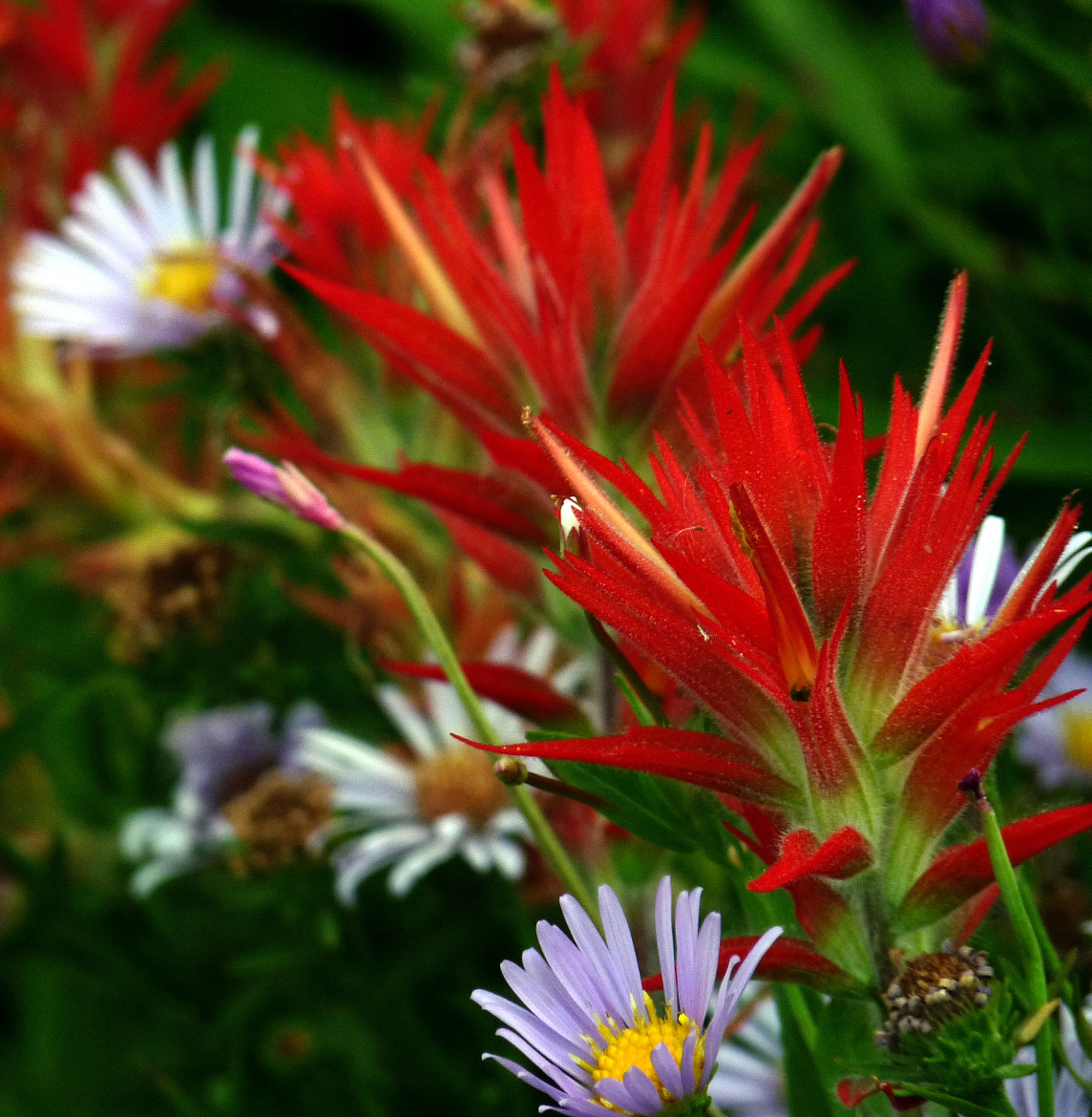 Photograph Wildflowers on Fire by Michael Sheltzer on 500px