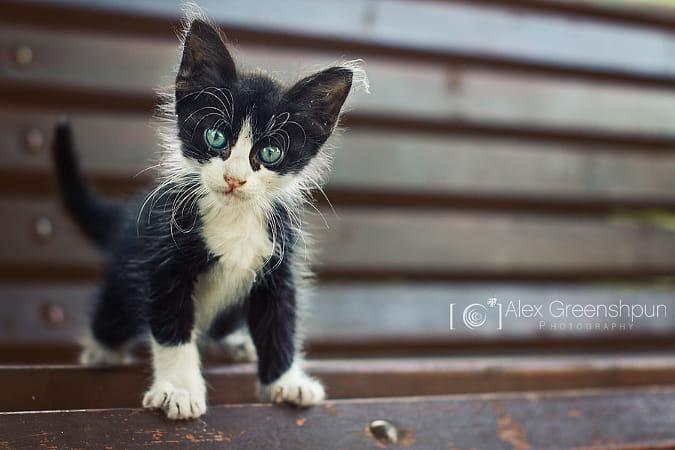 The Tiny Sir