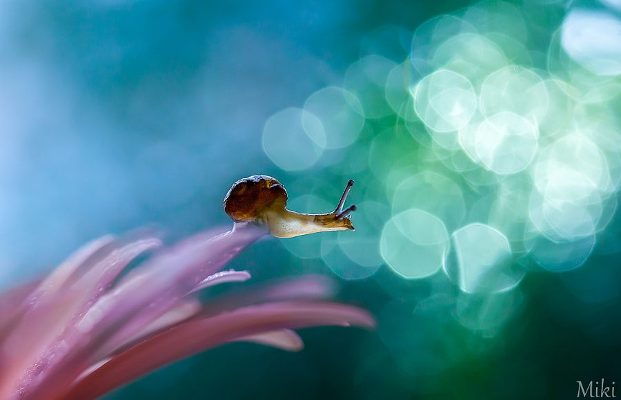 Photograph Look at the world by Miki Asai on 500px