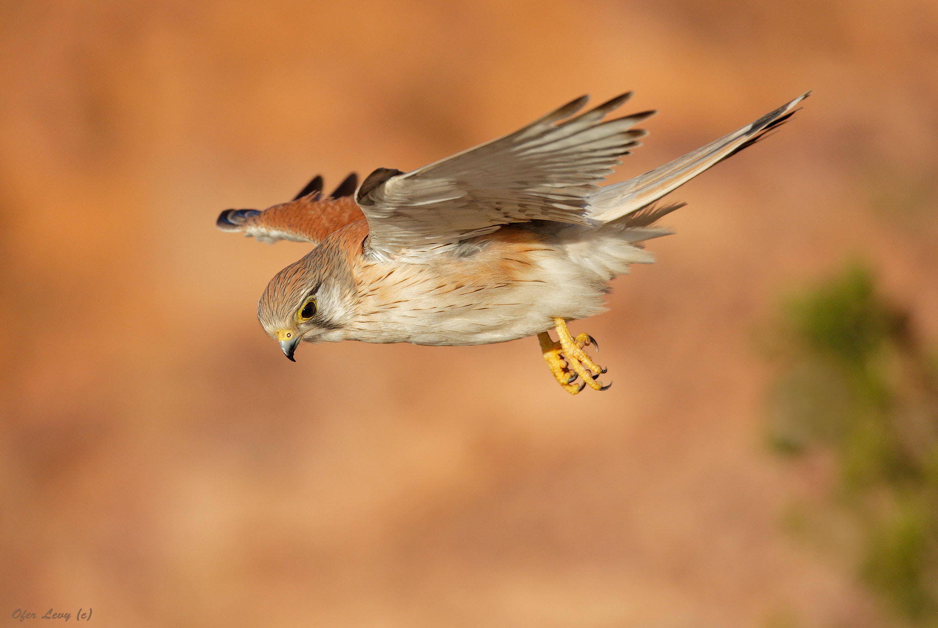 Photograph Hovering by Ofer Levy on 500px