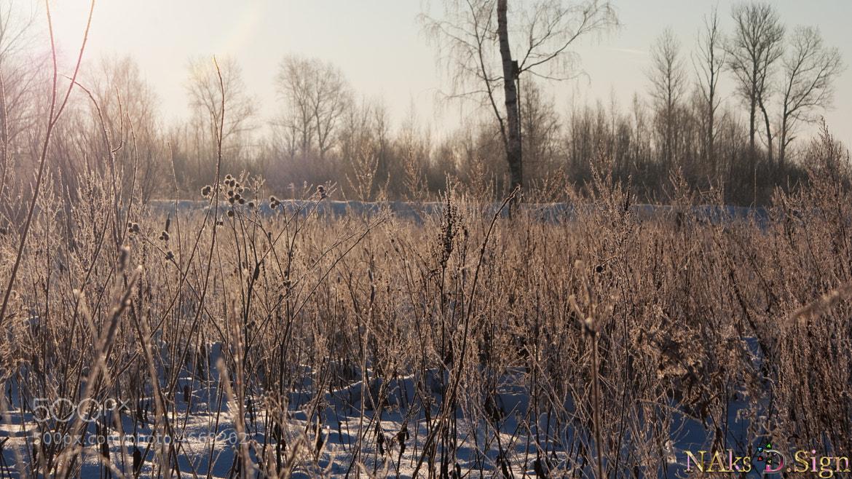 Photograph Winter by Nikita Aksyonov on 500px