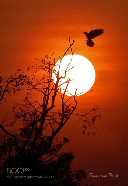 Photograph Bird & Sun by Sudheendr Bhat on 500px