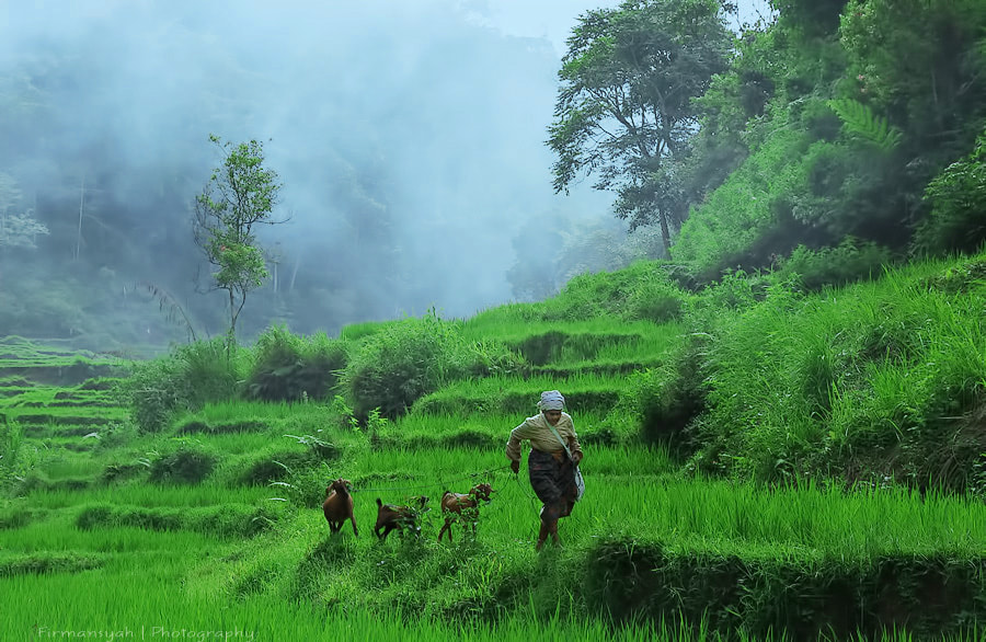 Photograph Goat herdsmen by Ricky firmansyah on 500px