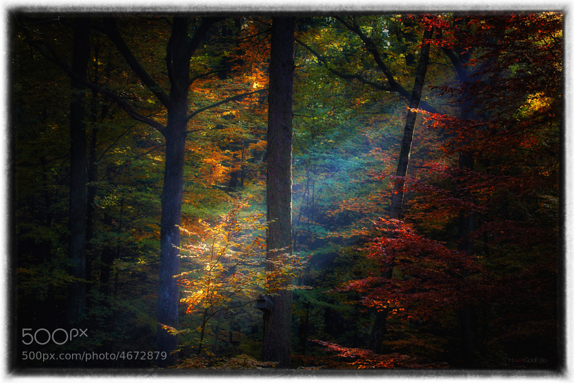 Photograph Herbstlicht by Hartmut Goldmann on 500px