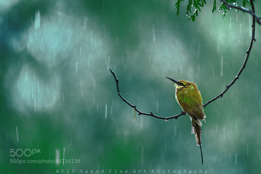 Photograph rain.. by Atif Saeed on 500px