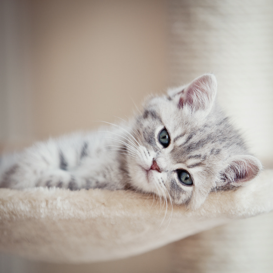 Photograph Tired by Andrea Jancova on 500px