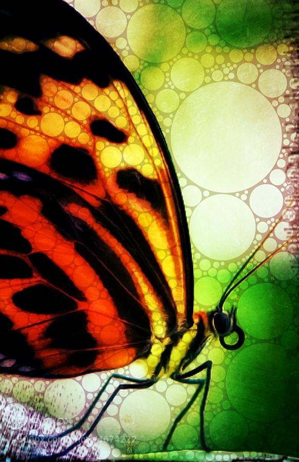 Original Image brewed in Percolator app