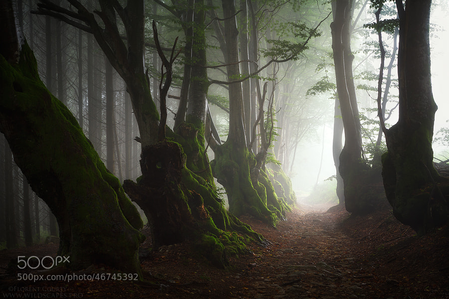 Photograph Elder Souls by Florent Courty on 500px